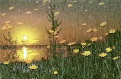 Dandelion Sunset (JoyceCorey) Tags: dreamland soe imagemanipulations musictomyeyes finegold flickrstars contemporaryartsociety loveforphotography artmix royalgroup flickrhearts flickraward flowerbeauty moonseclipse heartawards theunforgettablepictures flickridol photographersgonewild atouchofmagic thebestshots thefarpavilions  artofimages dragonflyawards getcreativeonflickr mailexchangeart universeofnature artedeluz magicuniverse itsmyartkissoffifyoudontlikeit flickrsgottalent atyourbest mygearandme mygearandme1 betterthangoodlevel1 goldstarawardlevel1 shieldofexcellencelevel1 kforkerkirasart shieldofexcellencelevel2 level1photographyforrecreation photohobbylevel1 fineplatinum theartistsmuseum chariotsofartistslevel1 chariotsofartistslevel2 soulophotographylevel1 soulophotographylevel2 youthinkthisisart niceshotlevel1 creativephotogroupbasic certifiedphotographerlevel1 flickrbronzeawardlevel1 soulocreativitylevel1 topphotoexpertlevel2 creativeimpulselevel1 redcarpethalloffameinvitedpicsonlylevel3 fotoartcircle flickrunofficial diamondstarplatinumphotos level2photographyforrecreationsilveraward