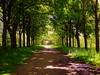 May avenue (perseverando) Tags: trees light green castle leaves shadows may lancashire rivington bolton avenue pictureperfect perseverando theenchantedcarousel magicunicornverybest fleursetpaysages