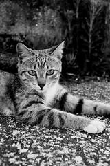 Guantes (//bangclack) Tags: blanco y negro gatos