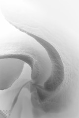 Gardenia Swirl (tltichy) Tags: bw white abstract black flower macro kitchen june canon garden virginia petals tubes swirl extension gardenia 2012 extensiontube kenko 5dmarkii 5d2 ef100mmf28islmacro
