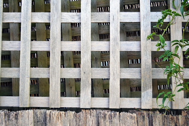 Find a grid pattern somewhere - Fence lattice