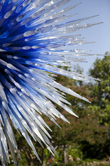 Dallas Star (Kimburlee) Tags: flowers sculpture chihuly art glass gardens dallas artist texas arboretum exhibit dalechihuly sculptures dallasarboretum dallastexas dallasstar 66acregarden