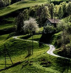 Sprung (Elliott Bignell) Tags: road schweiz switzerland spring suisse blossom strasse meadow meadows wiese wiesen ostschweiz blossoming svizzera bume baum frhling blhen walenstadt blht chweiz