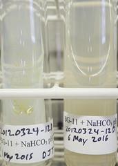 ORNG0373 (David J. Thomas) Tags: culture cave algae microbiology slant agar cyanobacteria phycology lyoncollege bg11 photobiont phycobiont