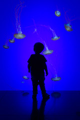 Halo (Draws_With_Light) Tags: camera people toronto canada animals silhouette jellyfish places davidhopley canoneosm efm1855mmf3556isstm