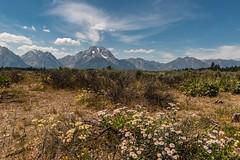 Mount Moran (greggohanian) Tags: wildflowers mountmoran grandtetons tetons cascadecanyon
