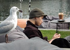 Seagull for Company (mikecogh) Tags: guy coffee hat cafe waiting seagull thinking wellington reflective