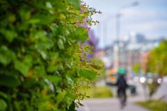 Street view (Maria Eklind) Tags: park city flowers summer flower green colors leaves graffiti se spring europe sweden outdoor sverige malm pildammsparken skneln sofielund lnngatan
