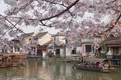 under the blossom[Explored] (kangxi504) Tags: china asia pentax xitang  ricoh zhejiang