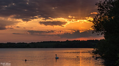 Pennington Flash (wiganworryer) Tags: sunset england sky sun lake reflection bird english ex water birds set clouds swimming canon landscape photography 50mm prime photo swan ray image f14 flash picture sigma keith full frame fixed rays leigh gibson dg pennington 6d 2016 hsm wiganworryer