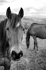 Caballos (ccc.39) Tags: bw horse byn monochrome caballos asturias bn oviedo