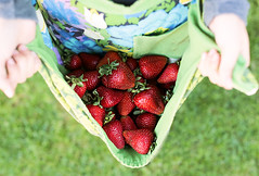 it's berry season (catklein) Tags: red fruit healthy strawberry many harvest apron