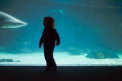 20160116-1-11A (alexlupo.) Tags: people ian aquarium shark toddler child sandshark sandtigershark raggedtoothshark greynurseshark mackerelshark greaterclevelandaquarium usohcleveland sharkseatube