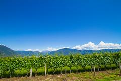 (c) Wolfgang Pfleger-6951 (wolfgangp_vienna) Tags: italien blue sky italy green del vineyard strada himmel vine vineyards grn vino sdtirol wein blauer altoadige weinstock eppan weinstrasse weingarten kaltern missian stradadelvino kalterersee weinstrase weinterrasse