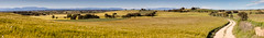 Plans de Si (Aicbon) Tags: panorama naturaleza verde green nature landscape pano cereal catalonia panoramica campos riu lleida pirineo sio lerida lasegarra hostafrancs secano sec montcorts montcortesdesegarra conreo plansdesi