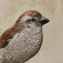 Sparrow (Artist / Crafter) Tags: sculpture acrylic relief sparrow paperclay gessobord