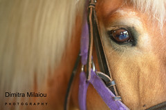 the look... (dimitra_milaiou) Tags: look love animal horse greek greece athens colour color day friend friendship purple eye reflections hair riding close up closeup macro light europe nikon d7100 d 7100 milaiou dimitra portrait face detail hold planet world earth attica city village beauty beautiful poetry care 50mm f18 life kind people soul head explore explored may 23 2016 marathon hellas spartacus live photography photos best moment nice happy ngc
