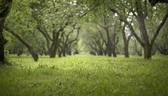 Apple mood (Varvara_R) Tags: green nature geotagged soft walk shrubbery appletree