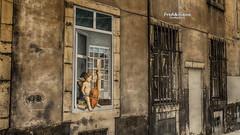 Rue de l'Ange... (Tra Te E Me (TTEM)) Tags: street angel photoshop dijon ange rue hdr musique lumixfz1000
