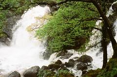Falls (strzez wartosci) Tags: film analog forest scotland highlands minolta hiking rangefinder trail westhighlandway minoltahimatic