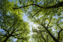20160628_F0001: Summer in the shade (wfxue) Tags: blue trees summer sky plants sun green sparkle clear shade tall leafs