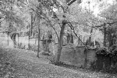 Minolta Hi-Matic G - Old Wall (Kojotisko) Tags: bw brno creativecommons czechrepublic vx400 konicamonochromevx400 minoltahimaticg konicamonochrome