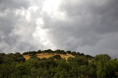 Sardinian hill before the storm (CEDRICtus) Tags: trees italy cloud storm green nature island sardinia hill maddalena