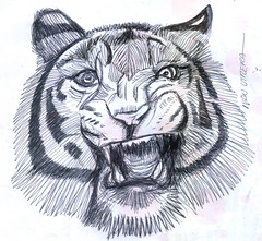 tigre a lapicero (ivanutrera) Tags: wild animal pen sketch drawing wildlife tiger sketching draw dibujo tigre lapicero boligrafo dibujoalapicero dibujoenboligrafo