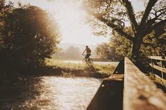 Morning Commute (Markus Fischer [meQ]) Tags: morning bridge sun tree bike sunrise river schweiz switzerland fuji swiss fujifilm biketowork aargau aare bycicle fujix vsco myfujifilm vscocam x100t