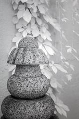 DSC_3777s (An Xiao) Tags: arboretum bonsai penjing