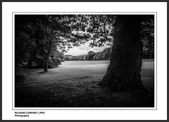 Trengwainton (Chalky666) Tags: trees tree art landscape mono nt nationaltrust