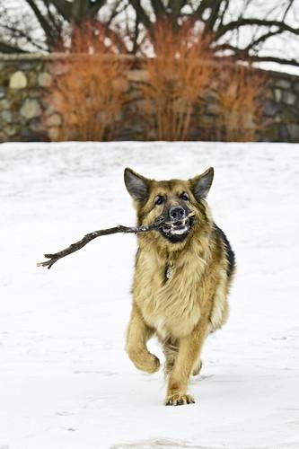 20110122 Dog Park 154-Edit
