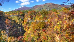 Naruko001 (vincemarion) Tags: red fall nature japan automne landscape rouge maple autumnleaves momiji gorge paysage tohoku japon naruko feuille koyo erable couleurautomnale