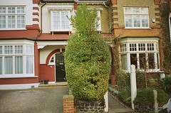 Is it just me or does that bush look like a pineapple faced man? (deepstoat) Tags: london face bush topiary freaky pineapple scream bizarre contaxt3 kodakportra400nc