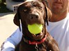 """Hershey as a pup • <a style=""""font-size:0.8em;"""" href=""""http://www.flickr.com/photos/77680067@N06/7027863359/"""" target=""""_blank"""">View on Flickr</a>"""