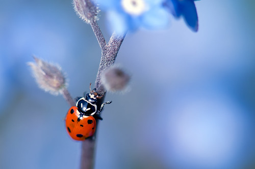 Ladybird and the Blues!