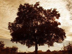 Silhouettes of a walnut tree (Batikart) Tags: park blue sunset sky cloud sun white plant tree art nature leaves silhouette backlight clouds canon fence germany garden way season landscape geotagged deutschland leaf spring flora europa europe sonnenuntergang pov path tag jahreszeit natur pflanze walnut himmel wolken greenhouse trunk agriculture zaun blatt tones sonnig landschaft sonne bltter baum cultivation 2012 weg frhling gegenlicht gewchshaus anbau g11 stamm fellbach walnuss badenwrttemberg frhjahr swabian laubbaum juglansregia 100faves 201205 deciduoustree