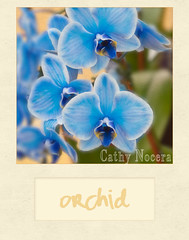 French Stucco (cnocera1) Tags: nocera blueorchid kimklassen