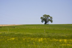 Minimal Landscape Tree (Jeff Cushner) Tags: tree farm amish minimalisticlandscape