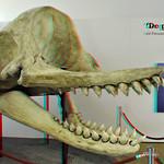 Leviathan NHM Rotterdam 3D thumbnail