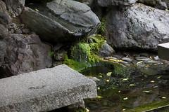 IMG_7976 (Christian Kaden) Tags: animal japan temple tiere kyoto frog arashiyama    kioto kansai frosch  tier tempel tenryuji      templeandshrines tempelundschreine