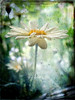 Light on a rainy day (Jean Turner Cain) Tags: flower texture floral rain yellow photoshop garden flora adobe daisy thegalaxy 100commentgroup rememberthatmomentlevel1 rememberthatmomentlevel2 rememberthatmomentlevel3 jeanturnercain