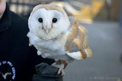 Barn Owl (Bri_J) Tags: nikon leeds owl barnowl falconry tytoalba royalarmouries d3200