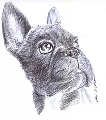 perro a lapicero (ivanutrera) Tags: dog animal pen drawing canino draw dibujo lapicero boligrafo dibujoalapicero dibujoenboligrafo