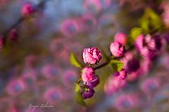 (kinga.lubawa) Tags: flowers flower colors canon spring sensual kwiaty kwiat kolory kolorowe soneczny sonecznie canon6d