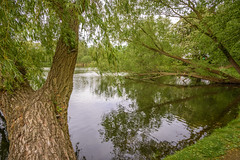 Down By The Lake (dietmar-schwanitz) Tags: trees lake green water germany landscape deutschland see wasser grn landschaft bume lightroom mecklenburgvorpommern mritz waren herrensee mritzeum dietmarschwanitz nikond750 nikonafsnikkor24120mmf40ged
