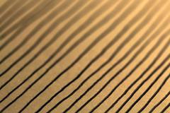 Straight lines? (Puyade) Tags: macro lines pencil stripes macromondays