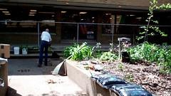 Length (Western Cuyahoga Audubon) Tags: youth conservation habitat beautification mentoring volunteerism environmentalconservation birdfriendly schoolprograms collaborativeleadership clevelandmunicipalschools waltonschool westerncuyahogaaudubon