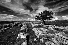 Limestone lines (images@twiston) Tags: park blue sky blackandwhite bw cloud white tree monochrome grass rock clouds landscape mono rocks angle pavement stones yorkshire wideangle national limestone gnarly fields lone bleak moors stark moor 16mm solitary scar ultrawide fell northyorkshire gnarled dales lonetree hawthorn moorland 3peaks solitarytree ingleborough limestonepavement penyghent whernside langcliffe grikes winskill yorkshiredalesnationalpark yorkshire3peaks winskillstones limestonelines