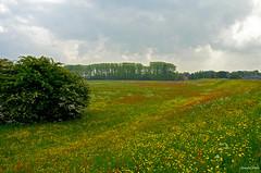 Landsape Flowers (JaapCom) Tags: trees holland nature dutch clouds landscape natural natuur zwolle overijssel naturel jaargetijden jaapcom